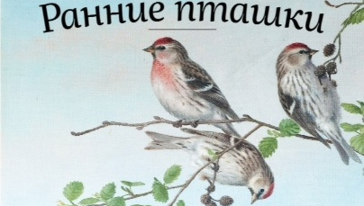 Feed       early bird